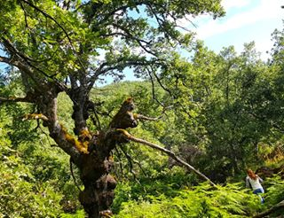 valleambroz - El viejo roble tiende sus ramas arropado por los helechos. Verde sobre verde en #valleambroz 🇬🇧 The old oak with its branches over the ferns, green over green at #AmbrozValley  #paraisomagico #nortedeextremadura #loves_extremadura #estaes_extremadura #caceresturismo #Extremadura #secreteurope #europetrip #5starnature #ig_spain #ok_spain #monumentalspain #super_spain #spainiswonderful #visitspain #spain_vacations #loves_spain #turismospain #earthlusters #instantes_fotograficos #loves_world #loves_bestpic #travelawesome #curatethis1x #clupofthephoto #earthexperience #igers_extremadura - 2018/06/04 22:00 - 1794511138413048568_1208394820
